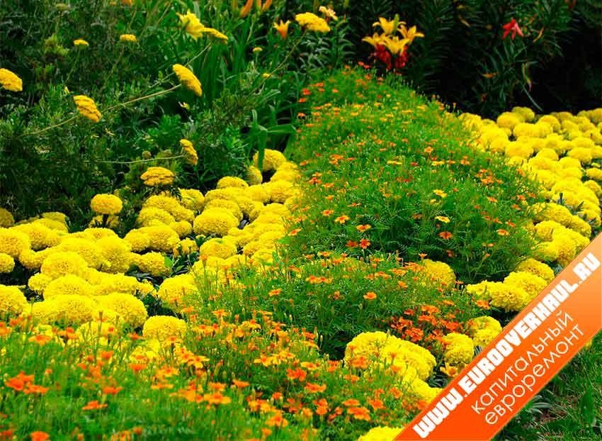 Клумба непрерывного цветения из многолетников схемы.