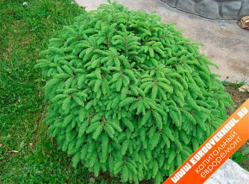 Растения на клумбе - фото.
